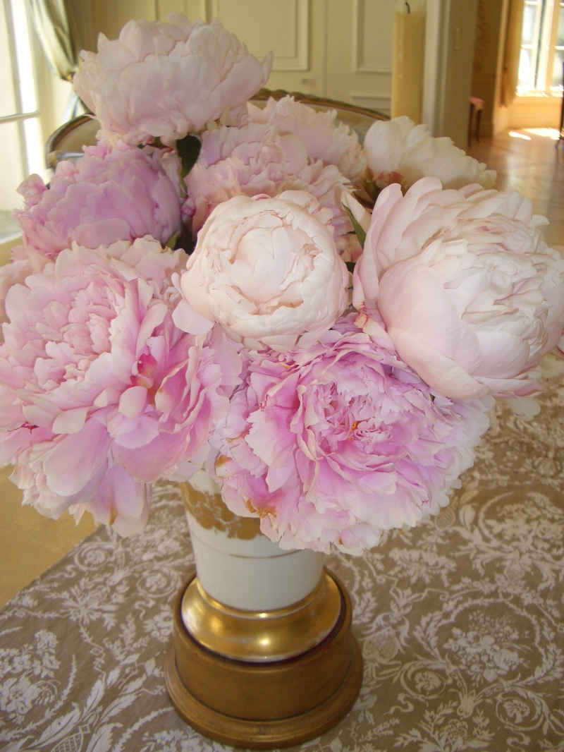 Peonies Season peony madness: how to make the most of a fleeting season - private