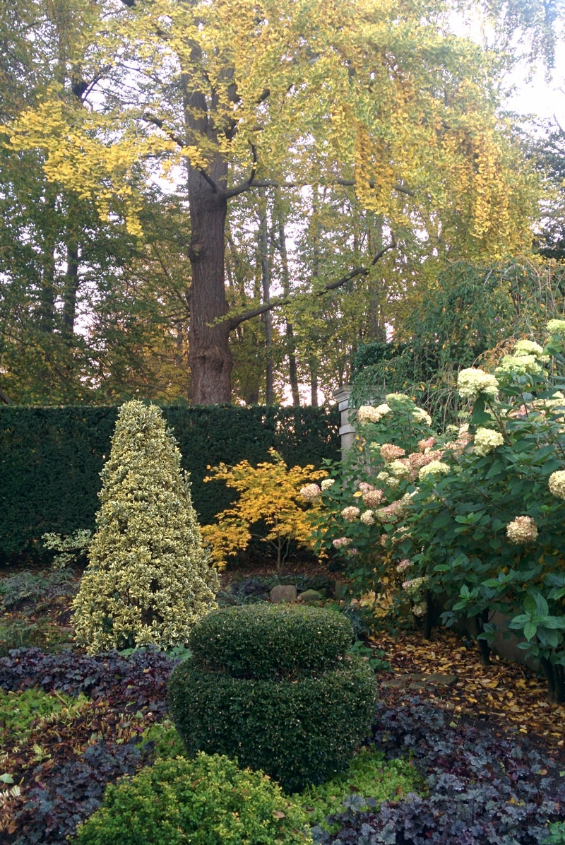 black bamboo garden, variegated ivy garden, variegated ginger garden, small boxwood garden, silk boxwood garden, cedar garden, on variegated boxwood garden design