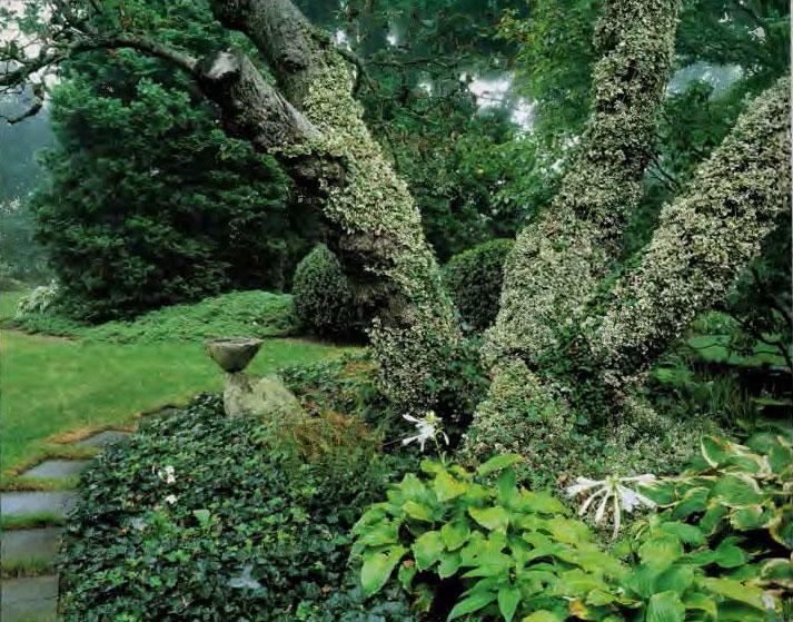 Happy-van-Beuren-tree-with-