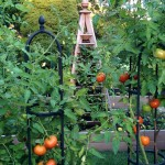A Late Summer Vegetable Garden