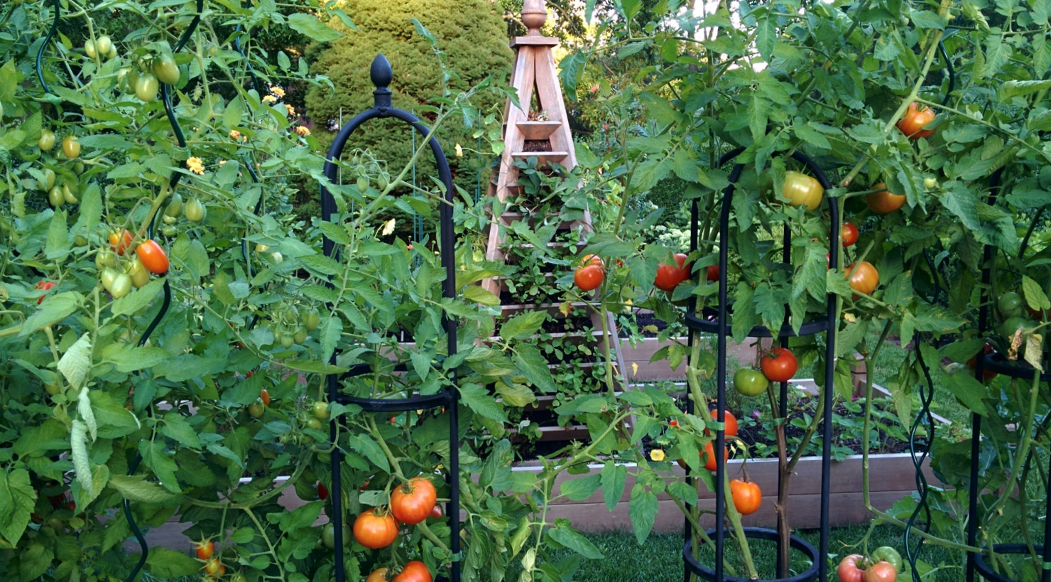 A late summer vegetable garden private newport for Summer vegetable garden
