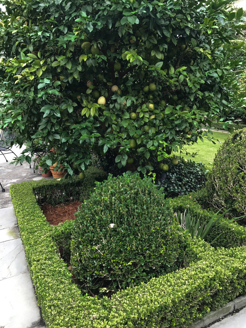her nod to those two features that characterize a new orleans garden water and patiocourtyard is first the small pond centered with a sculpture of