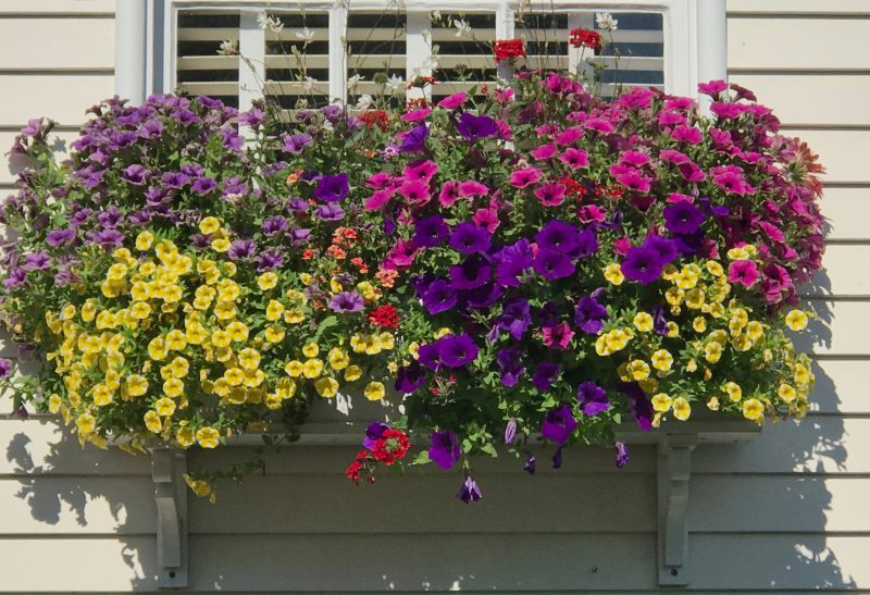 Window Boxes 4