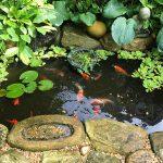 Hot Summer, Cool Garden