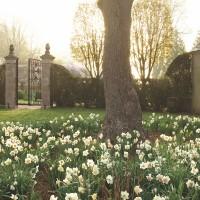Flower Magazine: A Newport Garden for Strolling