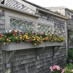 Window Boxes of Nantucket