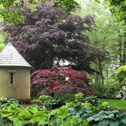 Newport, the Arboretum