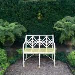 Ferns, an Elegant Addition to a Garden