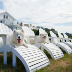 Newport Living: A Pampered Pets Perspective