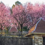 Inspiring Garden Design: Dumbarton Oaks