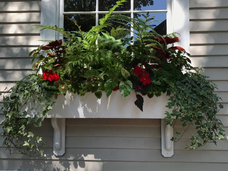 Window Boxes 6