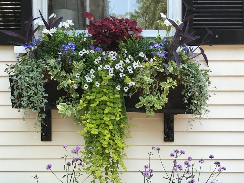 Window Boxes 3