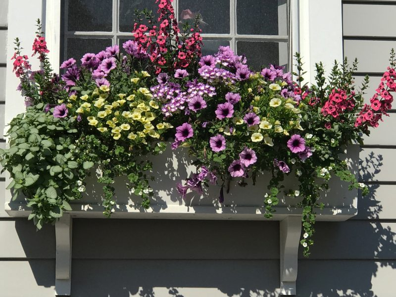 Window Boxes 8
