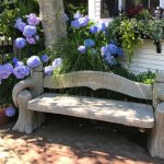 Hydrangeas: Summer Favorites