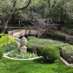 Inspiring Garden Design: A Daffodil Landscape in Dallas