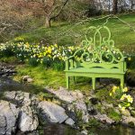 Among the Daffodils…the Parterre Bench