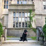Privileged Pets of Private Newport