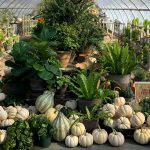 A Passion for Fall Plants