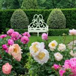 Ode to the Peony